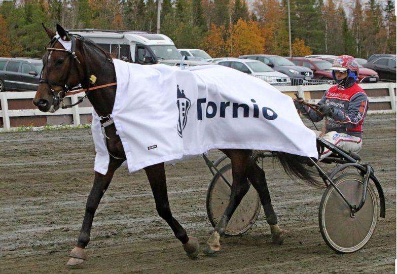 Cupido Sisu Lapplandsmästare och två segrar på Umåker!