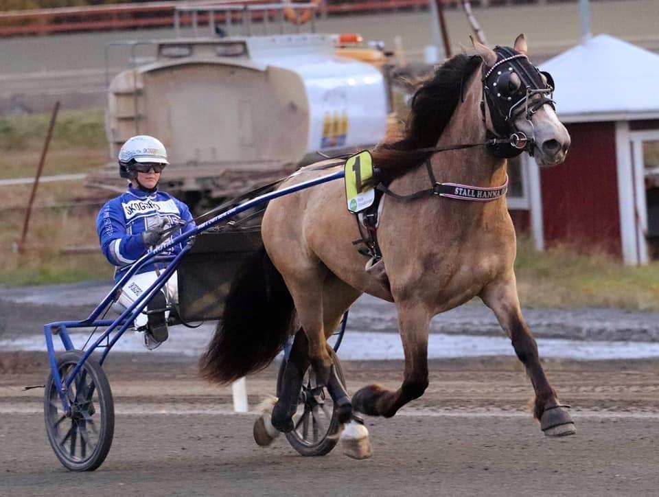 Triss i segrar för Engfors i Skellefteå!