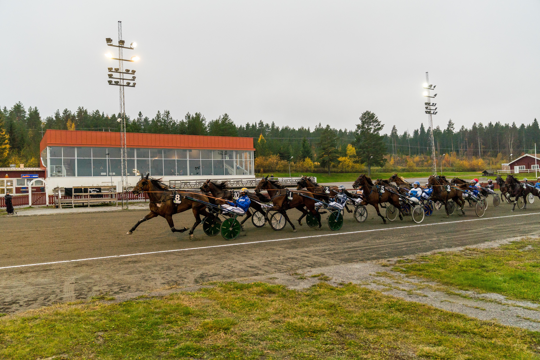 Ny seger för O.K.Nalan – fina pallplaster på V75 och Särkiniva i kallblodsloppet.