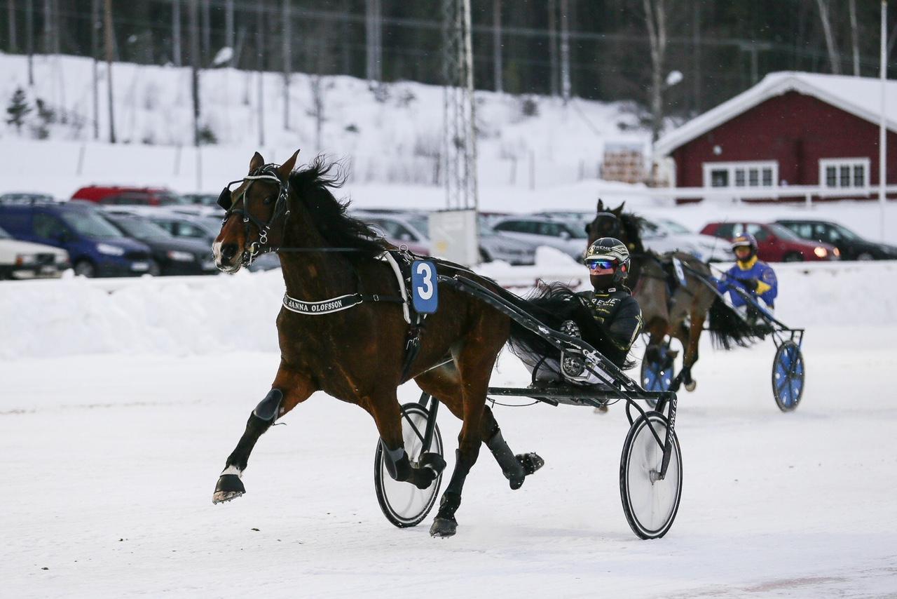 Fina V75-placeringar för Olofsson