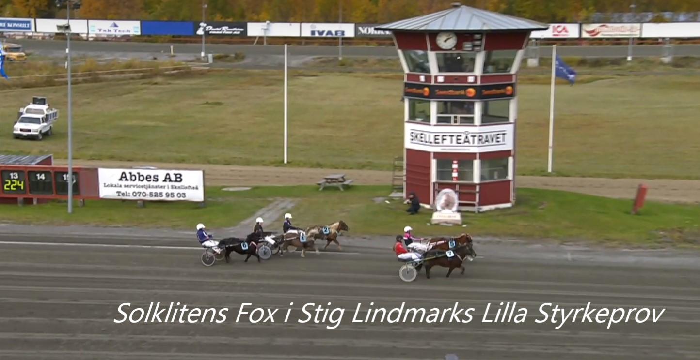 Ponnyheldag samt Stig Lindmarks lilla styrkeprov
