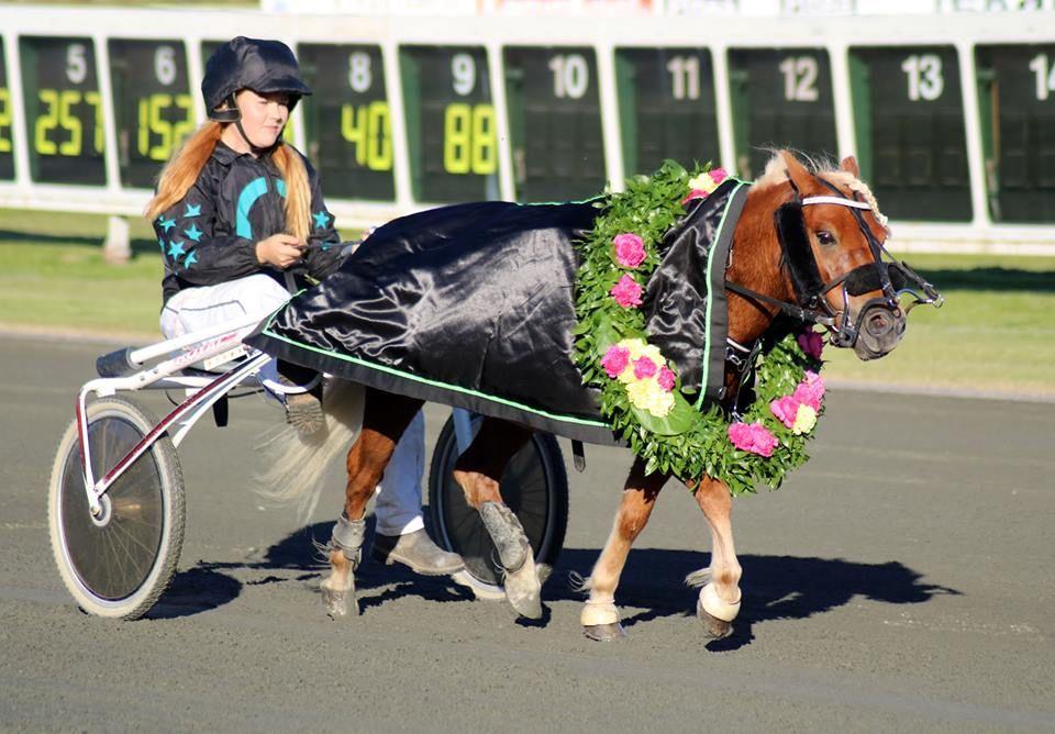 Kärleken till hästen är den gemensamma nämnaren på travskolan.